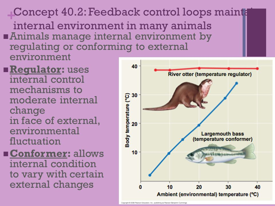 Concept 40.2: Feedback control loops maintain internal environment in many animals