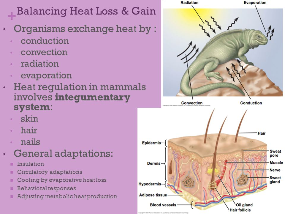 Balancing Heat Loss & Gain