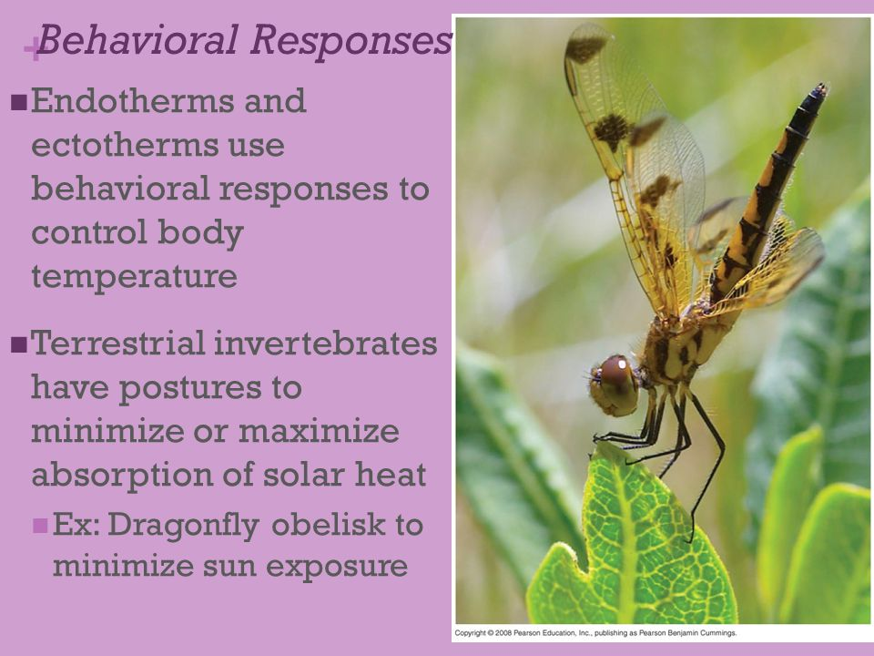 Behavioral Responses Endotherms and ectotherms use behavioral responses to control body temperature.