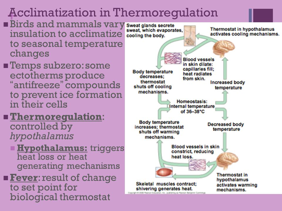 Acclimatization in Thermoregulation