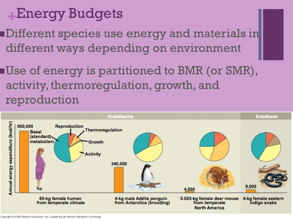 Energy Budgets Different species use energy and materials in different ways depending on environment.