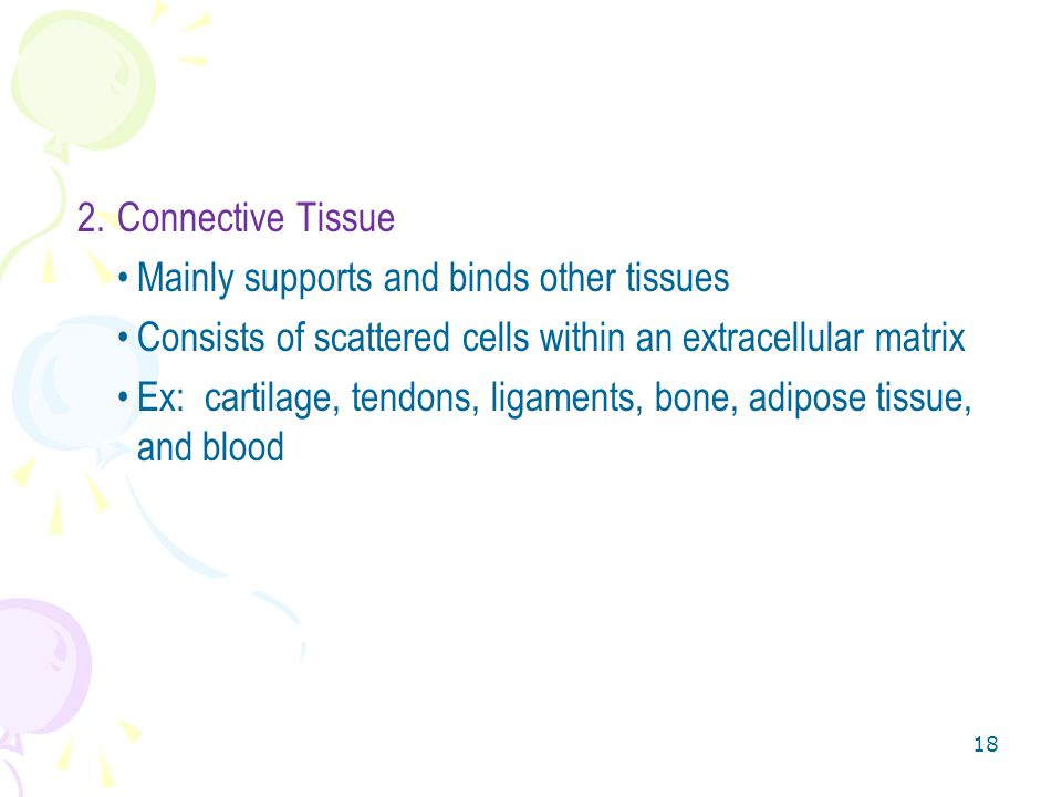 Connective Tissue Mainly supports and binds other tissues. Consists of scattered cells within an extracellular matrix.