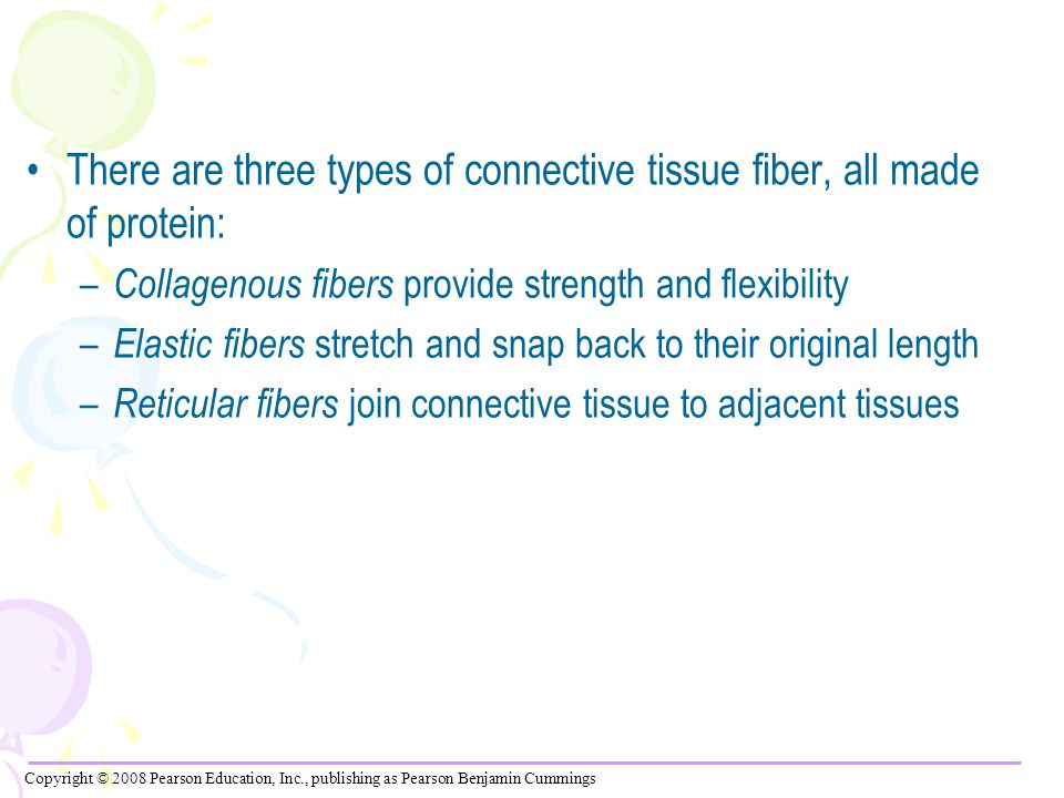 There are three types of connective tissue fiber, all made of protein: