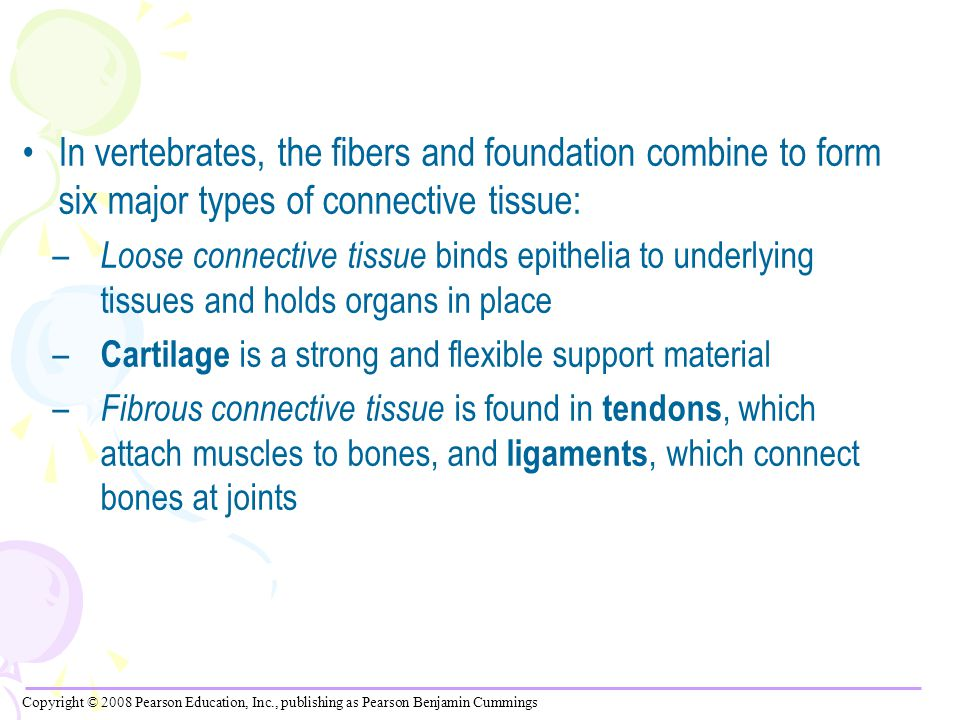 In vertebrates, the fibers and foundation combine to form six major types of connective tissue: