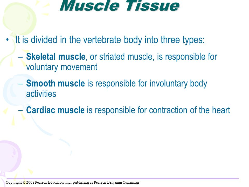Muscle Tissue It is divided in the vertebrate body into three types:
