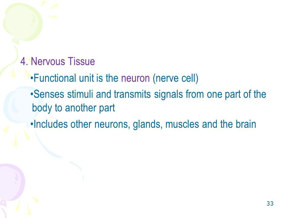 4. Nervous Tissue Functional unit is the neuron (nerve cell)