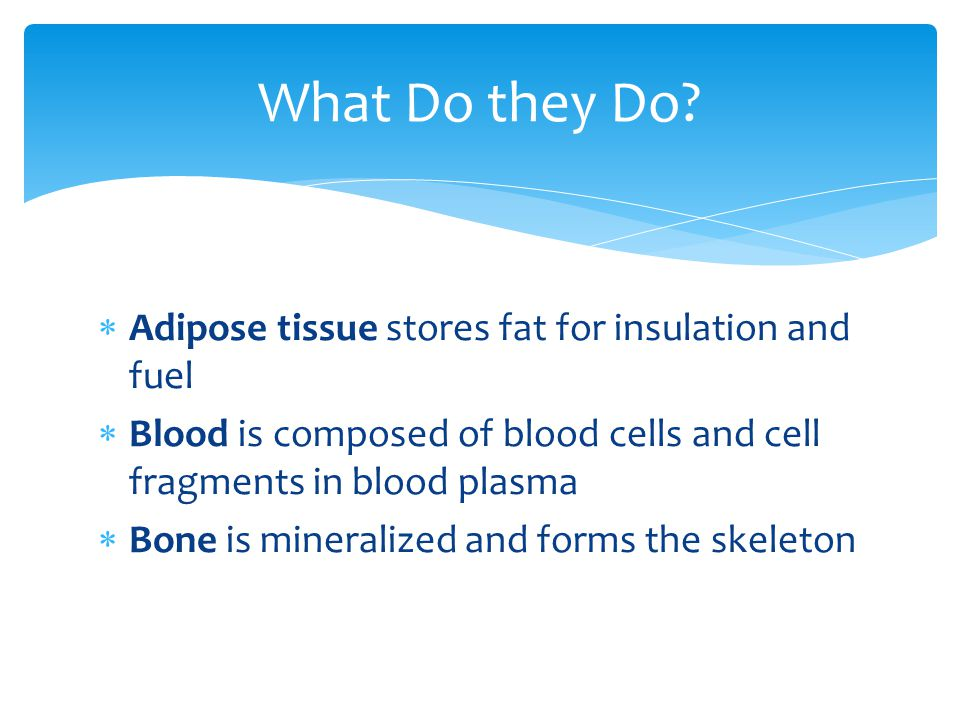 What Do they Do Adipose tissue stores fat for insulation and fuel