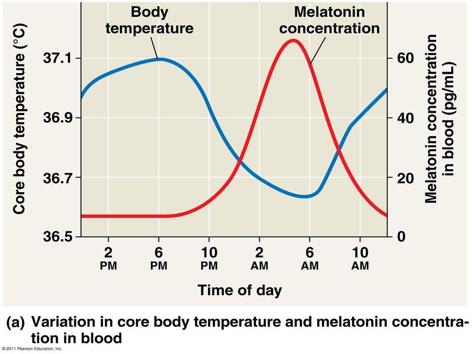 Figure 40.9 Human circadian rhythm.