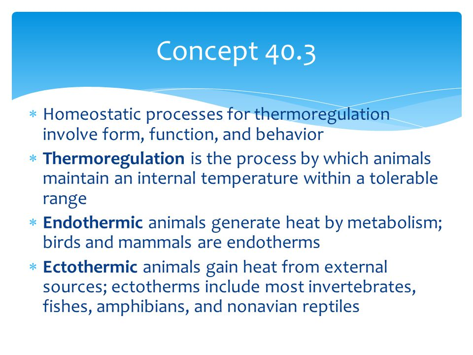 Concept 40.3 Homeostatic processes for thermoregulation involve form, function, and behavior.
