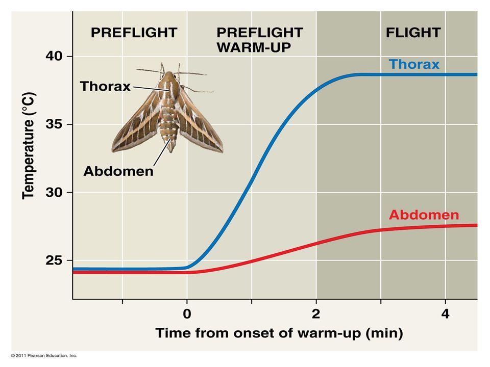 Figure 40.15 Preflight warm-up in the hawkmoth.