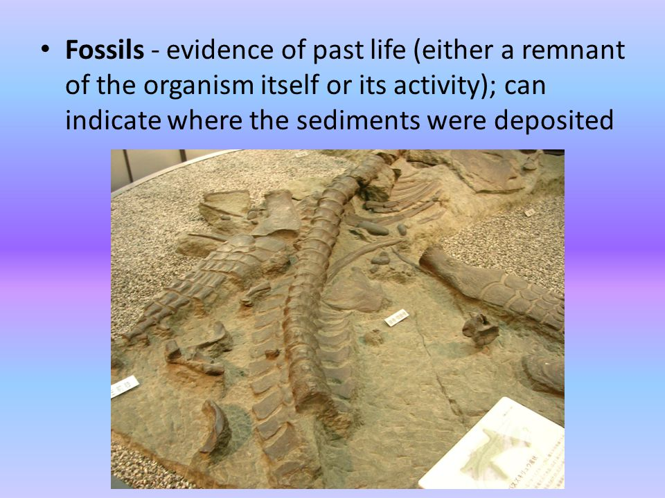 Fossils - evidence of past life (either a remnant of the organism itself or its activity); can indicate where the sediments were deposited