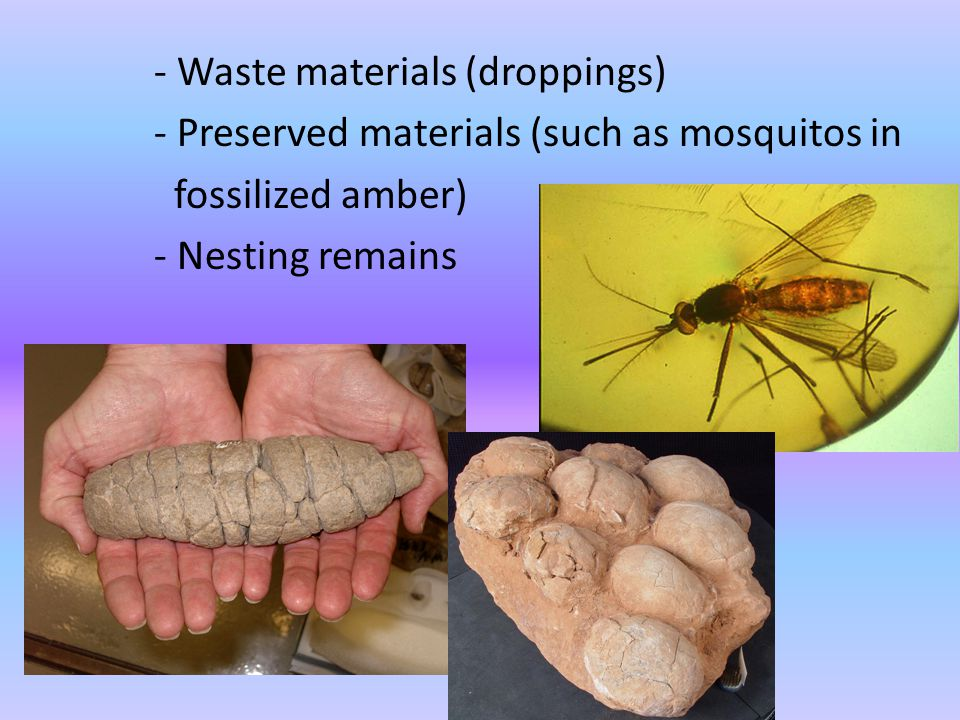- Waste materials (droppings)