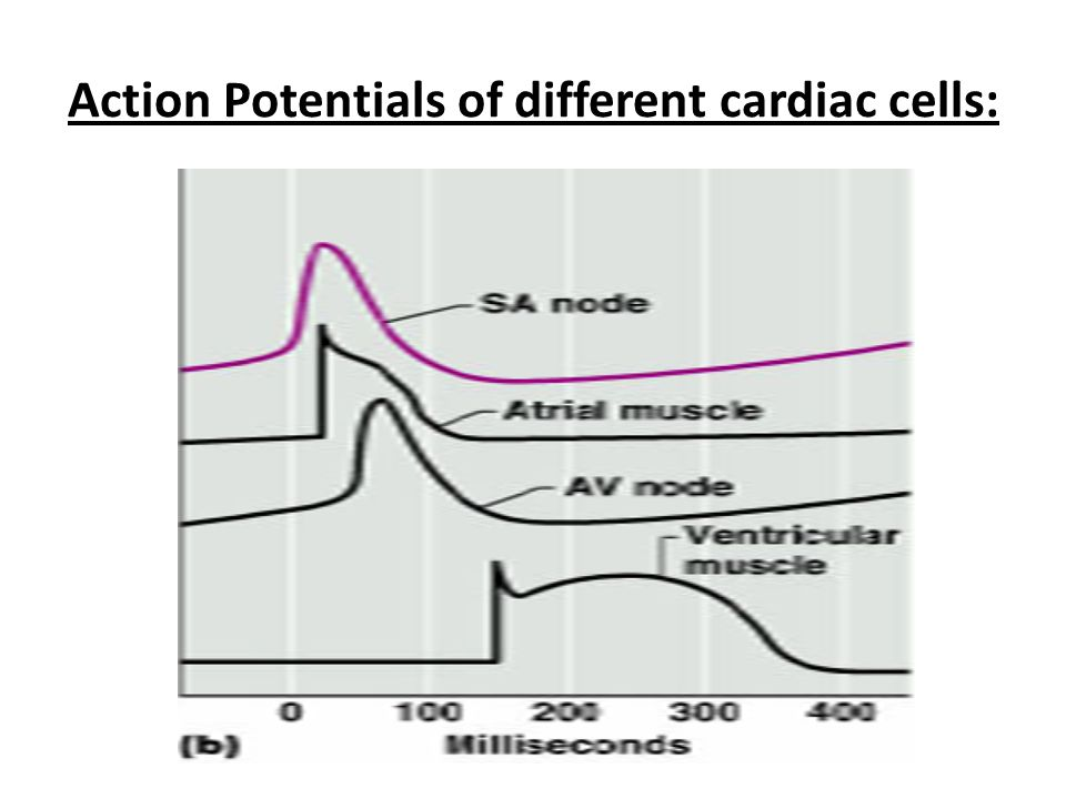 Action Potentials of different cardiac cells: