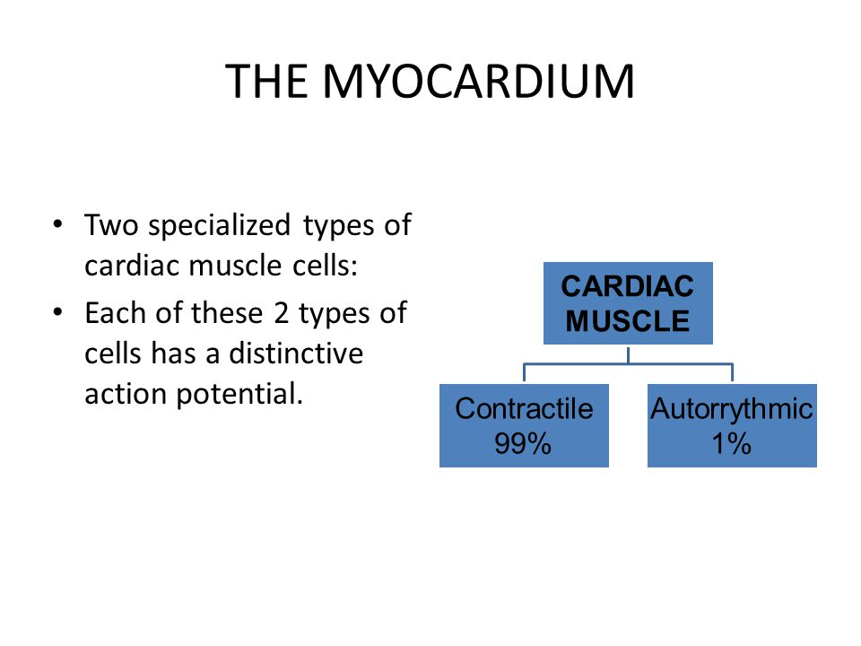 THE MYOCARDIUM Two specialized types of cardiac muscle cells: