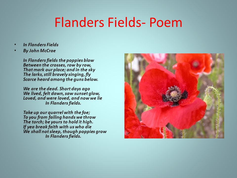 Flanders Fields- Poem In Flanders Fields