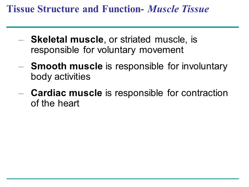 Tissue Structure and Function- Muscle Tissue