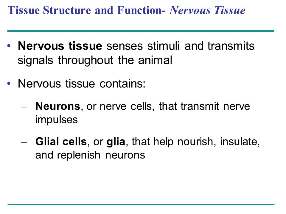 Tissue Structure and Function- Nervous Tissue