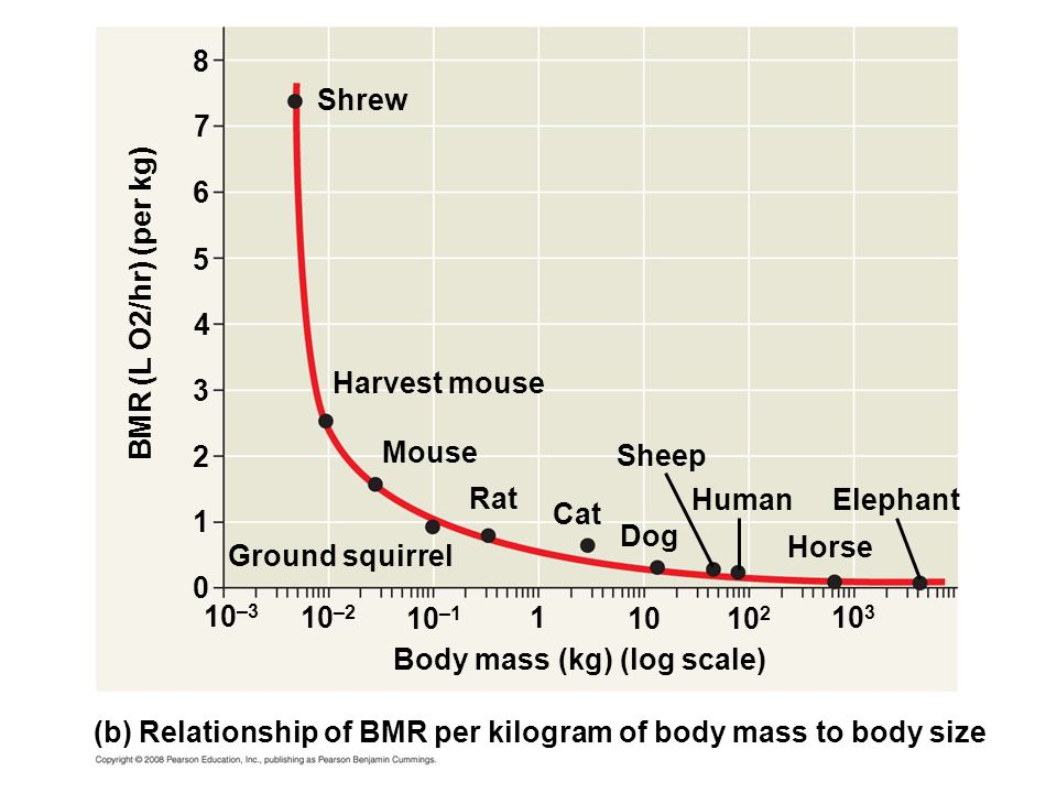 8 Shrew. 7. 6. 5. BMR (L O2/hr) (per kg) 4. Harvest mouse. 3. 2. Mouse. Sheep. Rat. Human.
