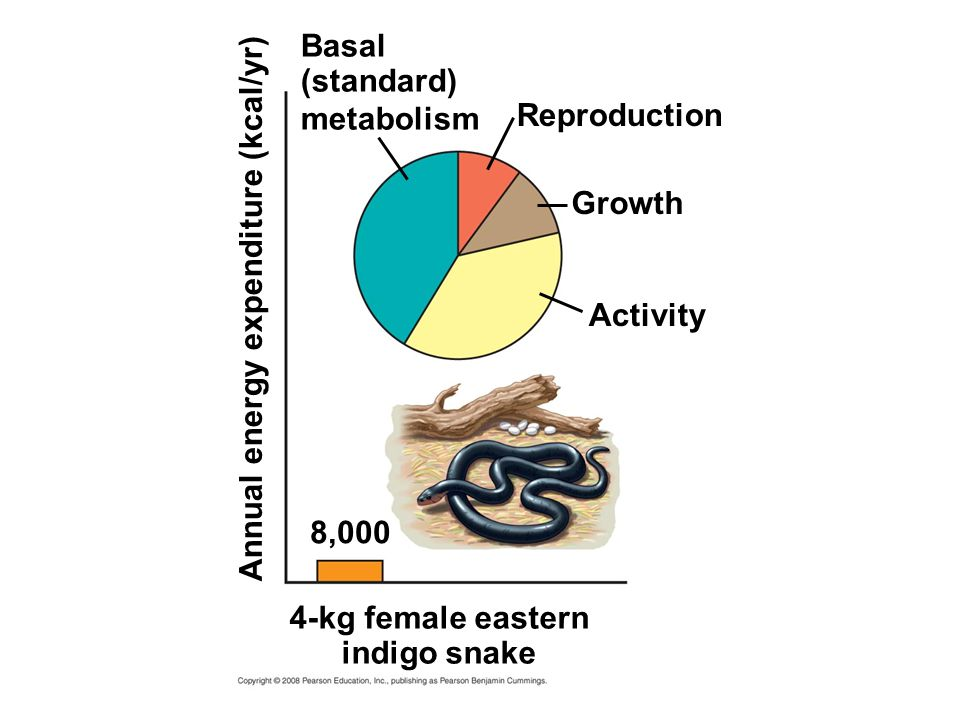 Basal (standard) metabolism. Reproduction. Growth. Annual energy expenditure (kcal/yr) Activity.