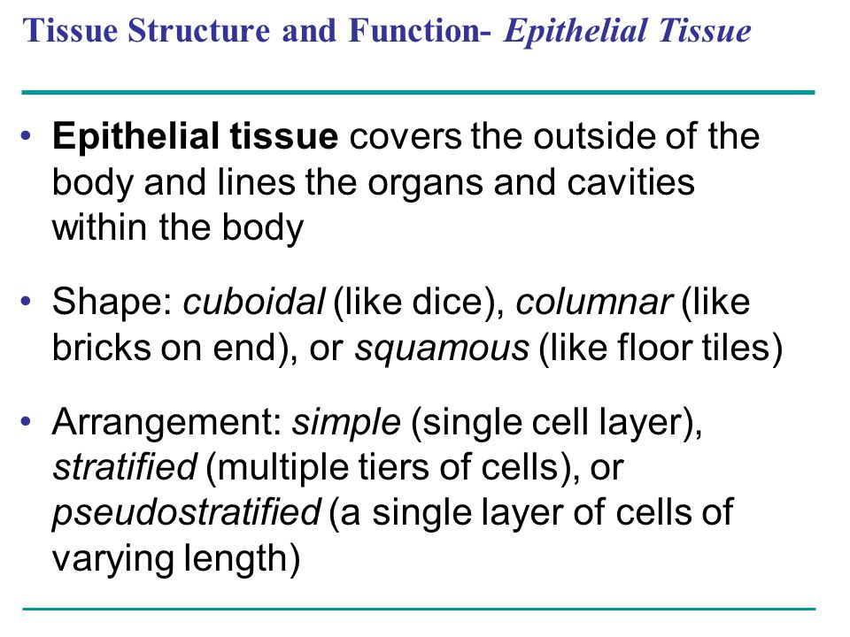 Tissue Structure and Function- Epithelial Tissue