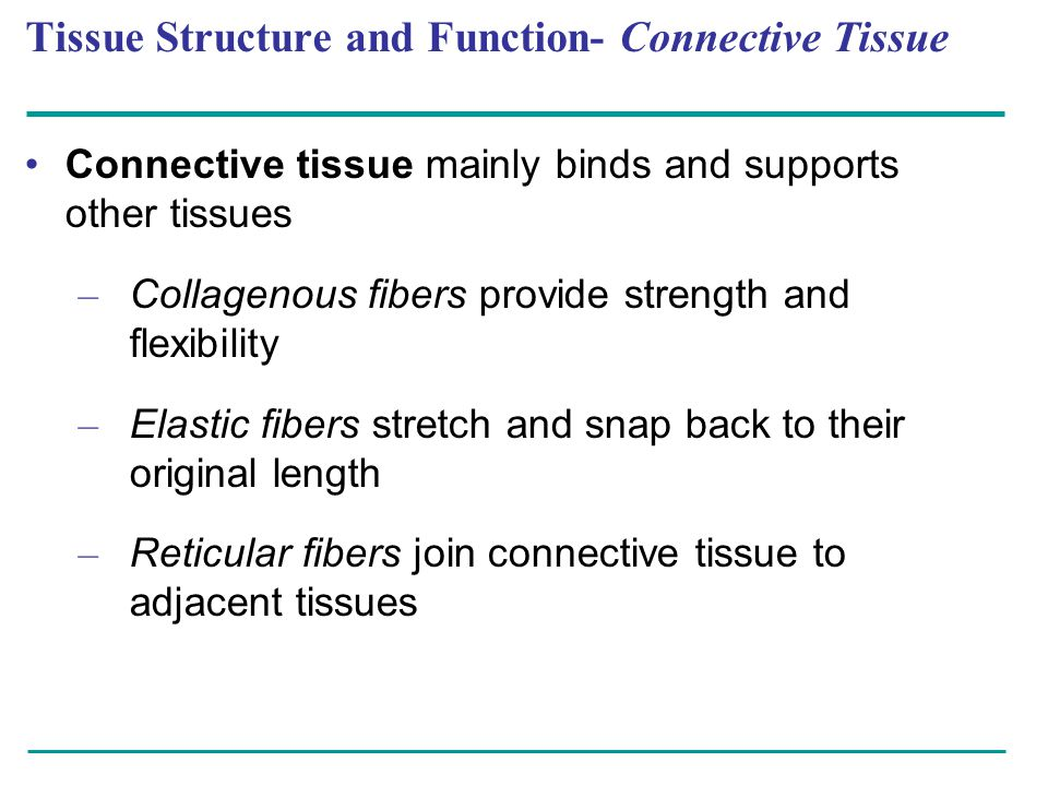 Tissue Structure and Function- Connective Tissue