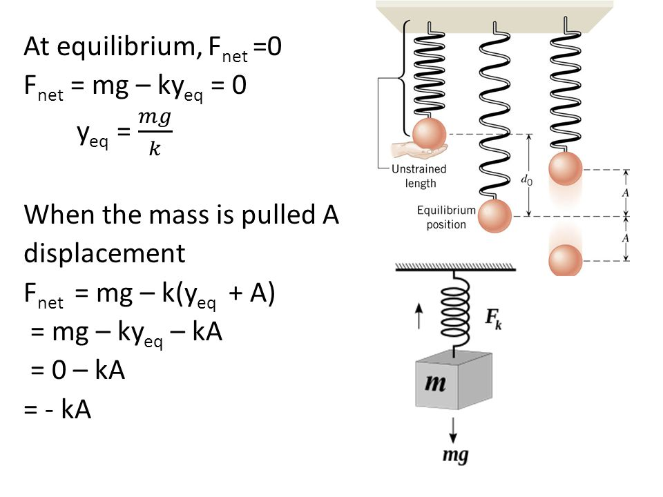 At equilibrium, Fnet =0 Fnet = mg – kyeq = 0 yeq = 𝑚𝑔 𝑘 When the mass is pulled A displacement Fnet = mg – k(yeq + A) = mg – kyeq – kA = 0 – kA = - kA
