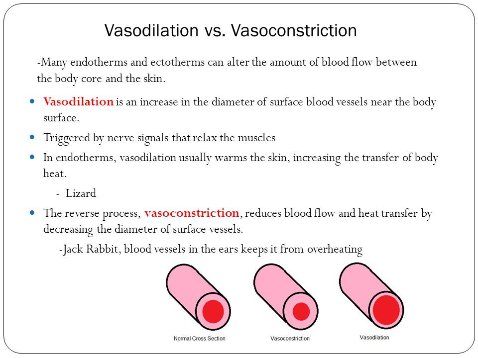 Vasodilation vs. Vasoconstriction