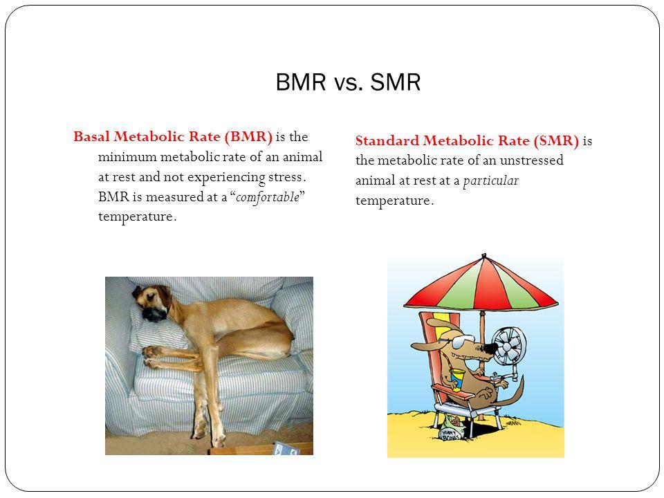 BMR vs. SMR