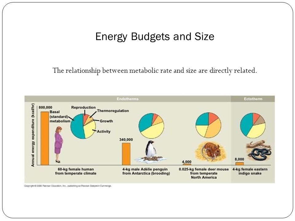 Energy Budgets and Size