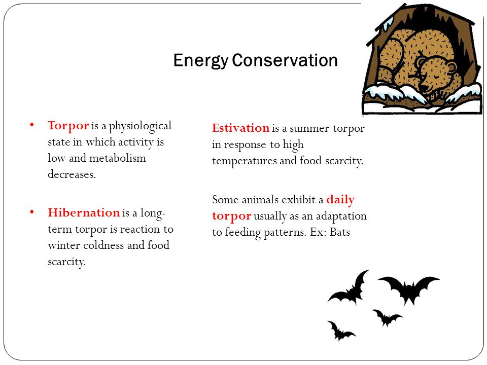 Energy Conservation Torpor is a physiological state in which activity is low and metabolism decreases.