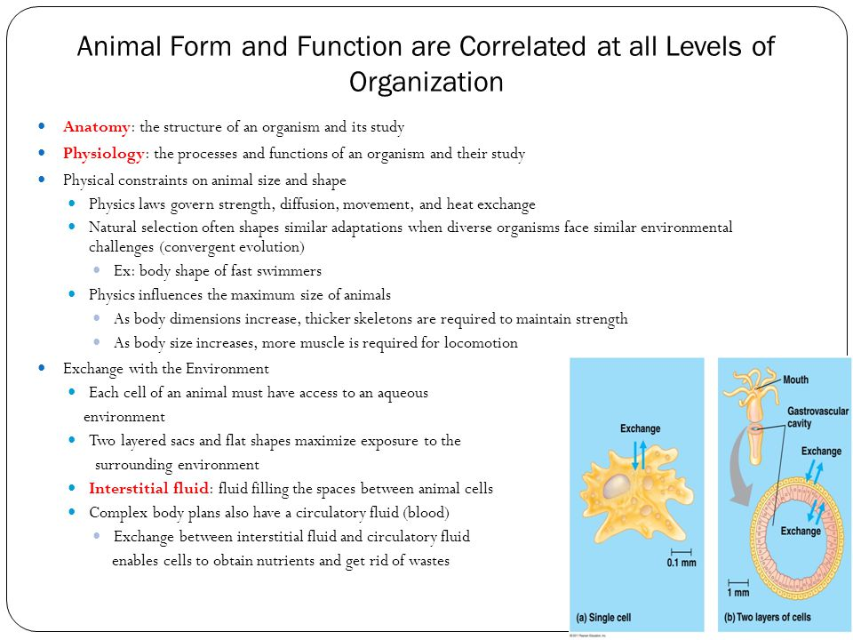Animal Form and Function are Correlated at all Levels of Organization