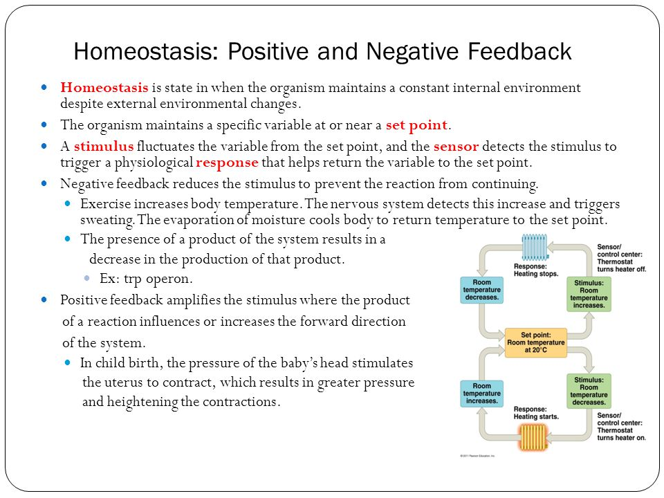 Homeostasis: Positive and Negative Feedback