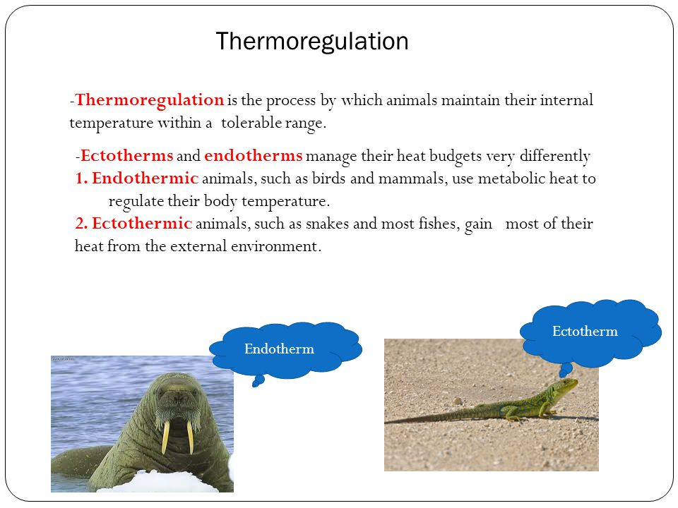Thermoregulation -Thermoregulation is the process by which animals maintain their internal temperature within a tolerable range.