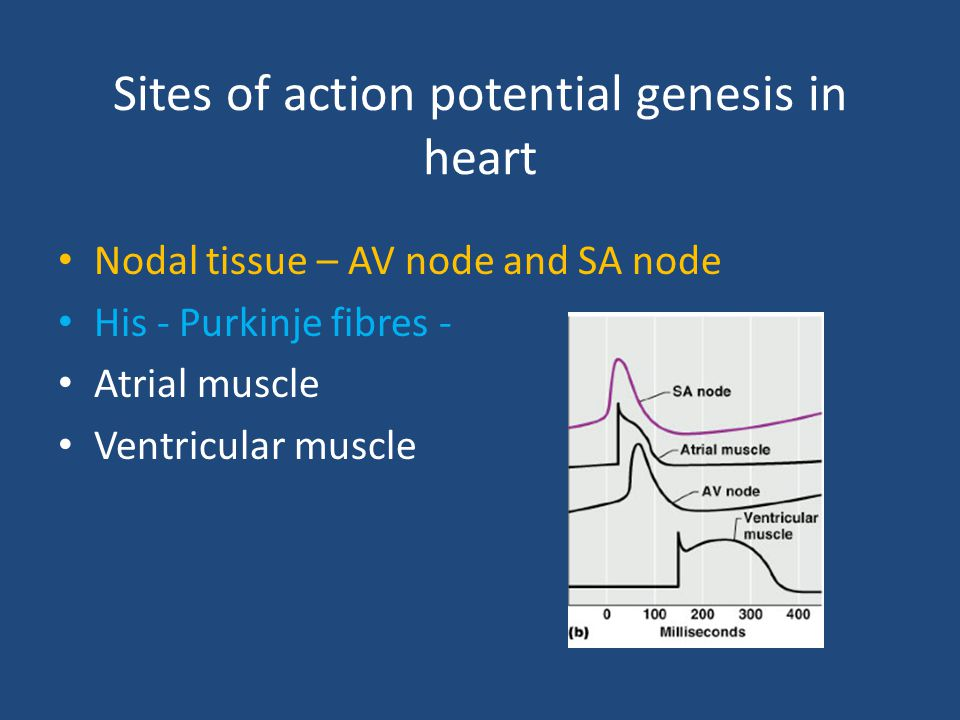 Sites of action potential genesis in heart