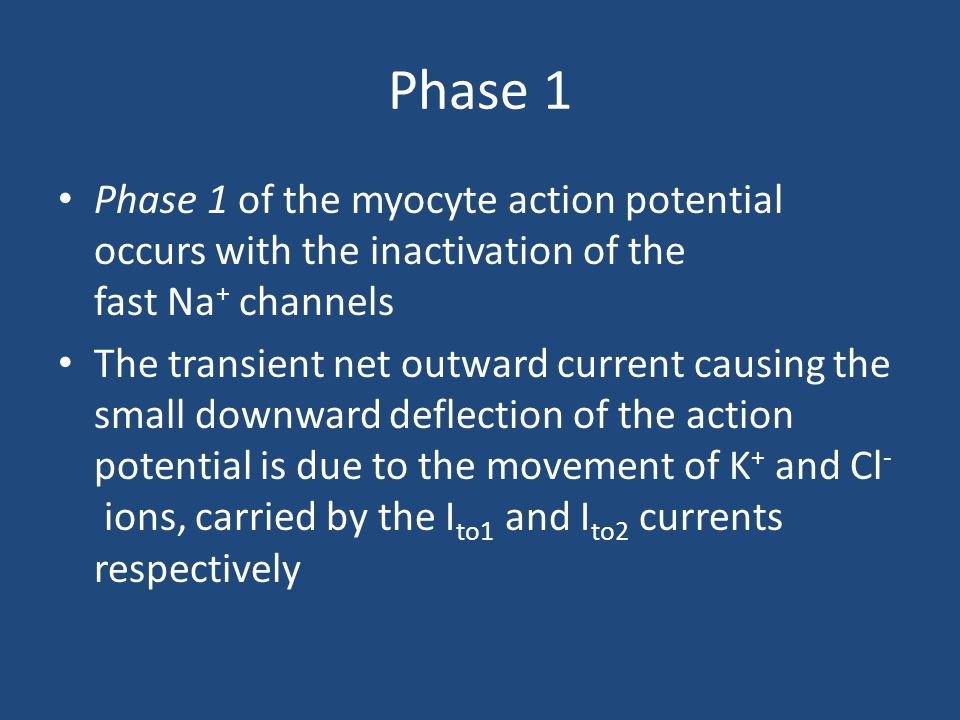 Phase 1 Phase 1 of the myocyte action potential occurs with the inactivation of the fast Na+ channels.
