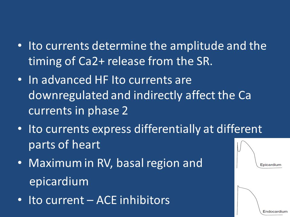 Ito currents determine the amplitude and the timing of Ca2+ release from the SR.