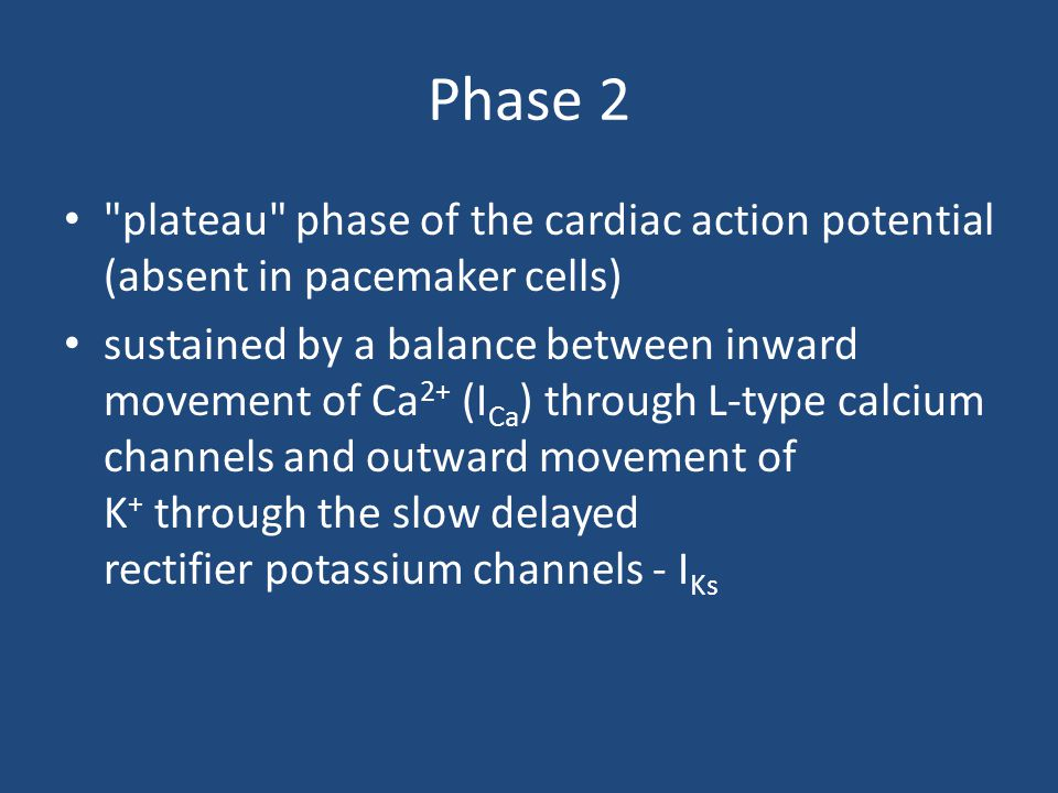 Phase 2 plateau phase of the cardiac action potential (absent in pacemaker cells)