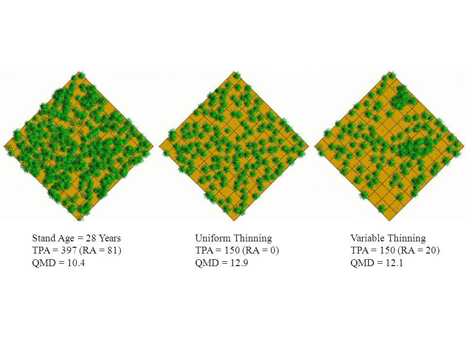 Stand Age = 28 Years TPA = 397 (RA = 81) QMD = 10.4. Uniform Thinning. TPA = 150 (RA = 0) QMD = 12.9.