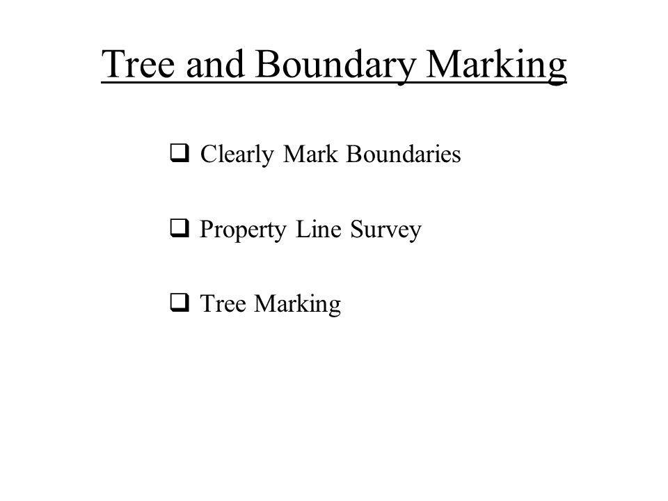 Tree and Boundary Marking