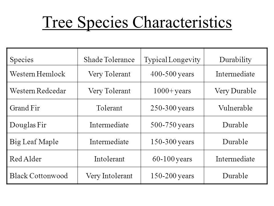 Tree Species Characteristics