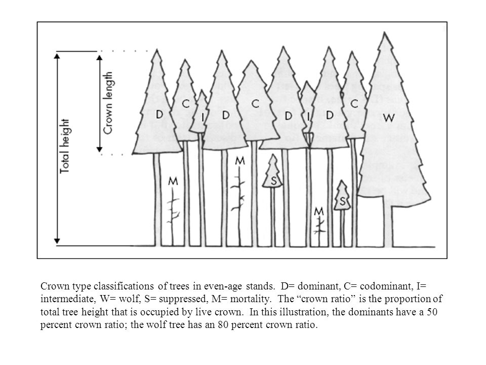 Crown type classifications of trees in even-age stands