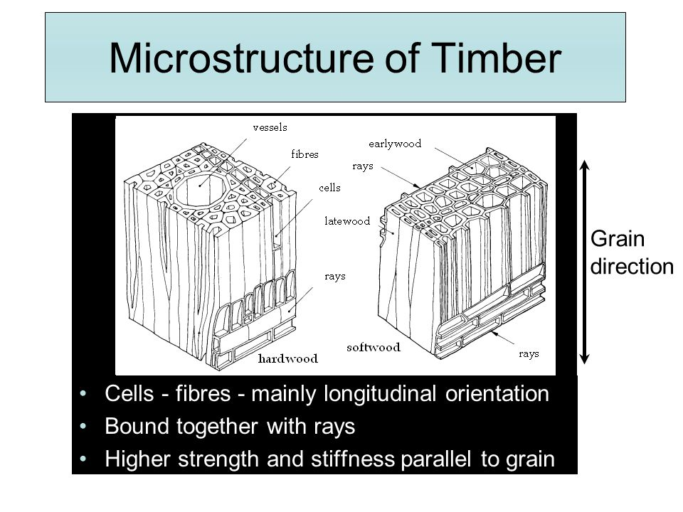 Microstructure of Timber