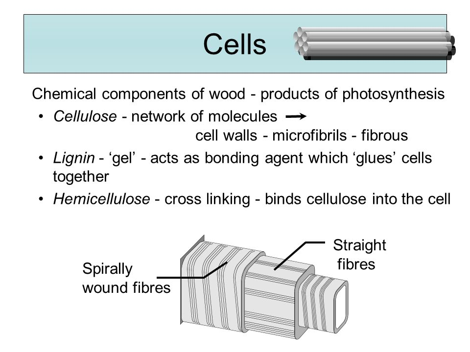 Cells Chemical components of wood - products of photosynthesis