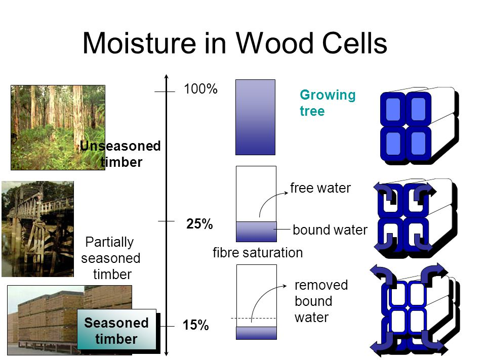 Moisture in Wood Cells 100% Growing tree Unseasoned timber free water
