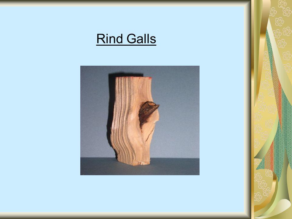Rind Galls