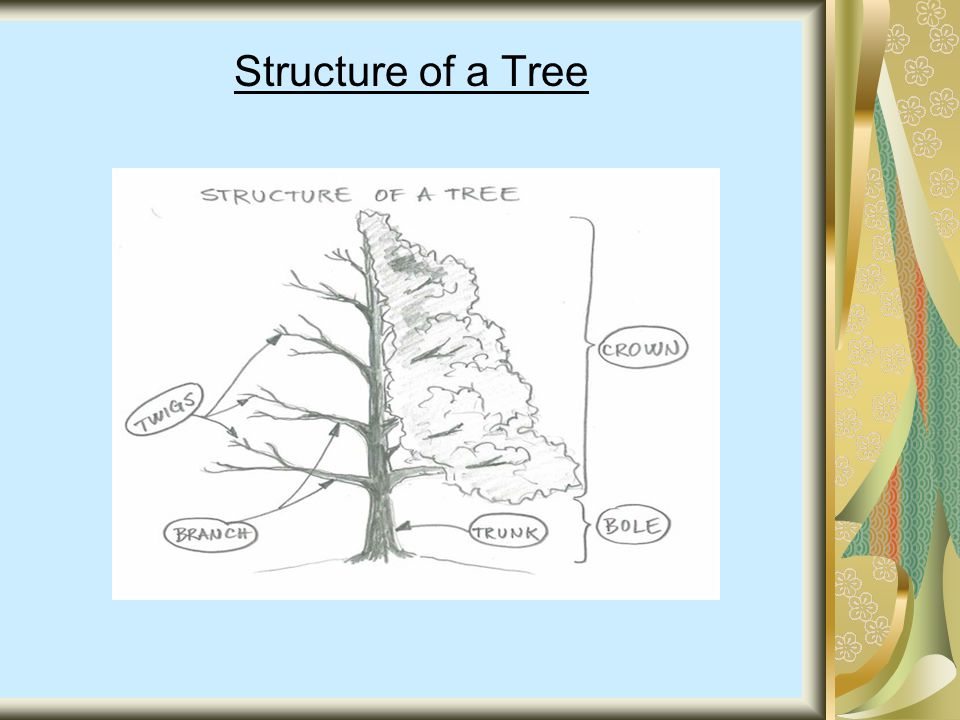 Structure of a Tree