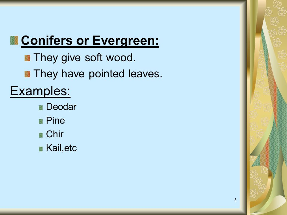 Conifers or Evergreen: