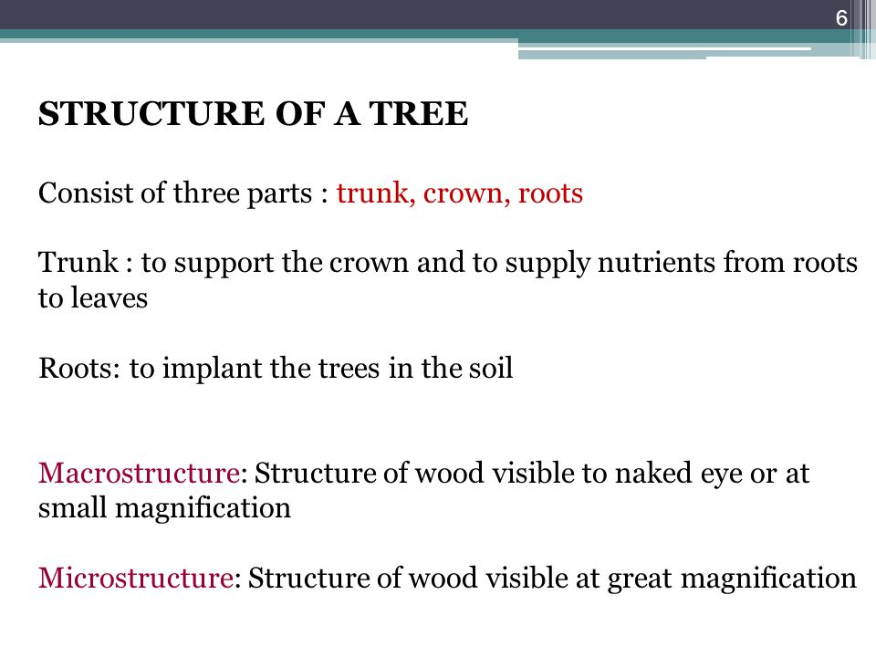 STRUCTURE OF A TREE Consist of three parts : trunk, crown, roots