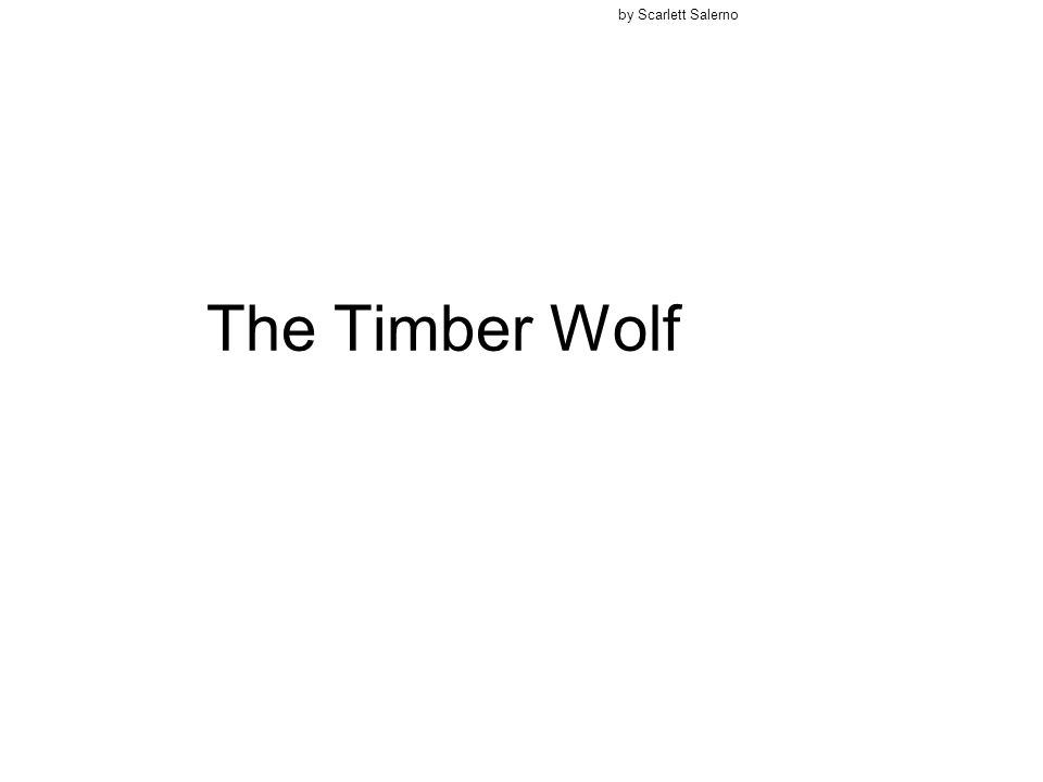 by Scarlett Salerno The Timber Wolf