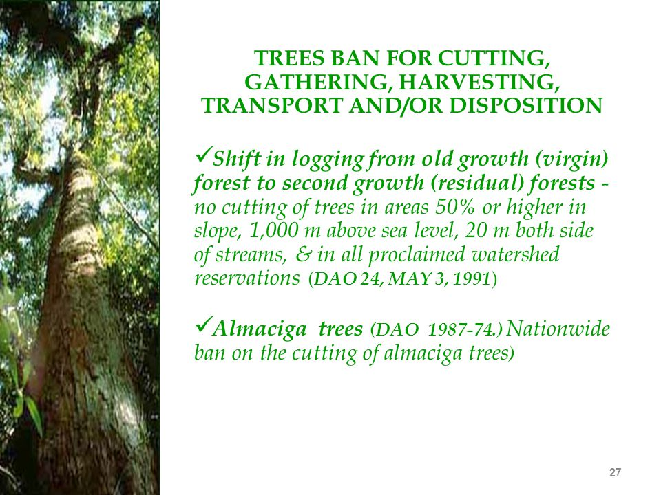 TREES BAN FOR CUTTING, GATHERING, HARVESTING, TRANSPORT AND/OR DISPOSITION